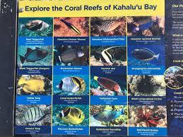 Spicebush Log Snorkeling The Reefs Of Kona Hawaii