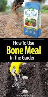 Bone Meal Fertilizer How To Use Bonemeal In The Garden