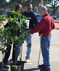 Urban Harvest 10th Annual Fruit Tree Sale  Event CultureMap HoustonFruit Tree Sale Houston