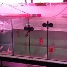 angel fish aquarium photos tilak chowk belgaum aquarium fish dealers