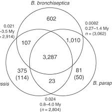 A Complement Venn Diagram Venn Diagram Showing Gene Complements Of B Pertussis B