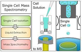 Mass Spectrometry And Laser Spectroscopy Ornl