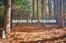 Forest Quotes Extraordinary Nature Is My Teacher Nature Quotes For Wall Quote Art Etsy