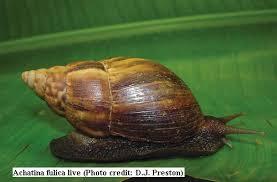 Image result for snails