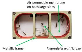 IJMS | Free Full-Text | Modulation of Iberian Ribbed Newt Complement  Component C3 by Stressors Similar to those Encountered during a Stay  Onboard the International Space Station | HTML