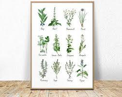 Botanic Chart Etsy