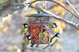 Пернатые «полярники». Какие птицы остаются зимовать ...