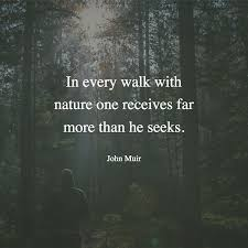 40 Inspirational Quotes That Will Make You Want To Go Hiking Fascinating Forest Quotes