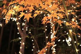 japanese outdoor lighting. Autumnal Fantasy: Japanese Maple And Fairy Lights. Modern Outdoor Lighting F