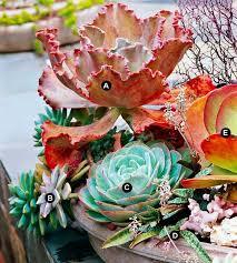 421 Best Succulent Plants Images On Pinterest  Succulents Garden Succulent Container Garden Plans