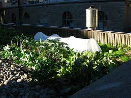 creating your own rooftop garden