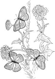 Small Picture 85 best butterfly coloring pages images on Pinterest Coloring