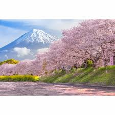 Us 9 31 33 Off Allenjoy Professional Photography Background Beautiful Mountain Fuji Sakura Cherry Blossom Spring Backdrop New Design Photocall In