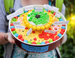 animal cell project candy. Delighful Project Source Inside Animal Cell Project Candy I