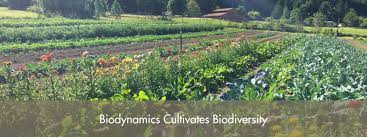 biodynamic gardening. Delighful Gardening Biodynamics Is A Holistic Ecological And Ethical Approach To Farming  Gardening Food Nutrition With Biodynamic Gardening D