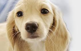<b>Игрушки</b> для собак
