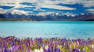 24 New Zealand Wallpapers - Wallpaperboat