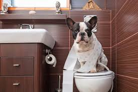 dogs bathroom habits. essential tips on toilet training for dogs bathroom habits t