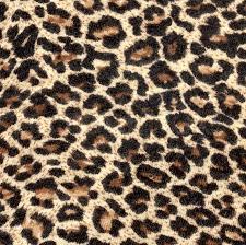 Leopard Pattern Mesmerizing Leopard Pattern As Background Stock Photo Colourbox