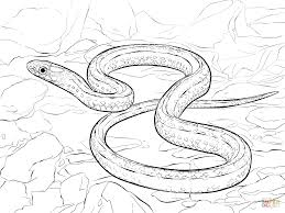 plains garter snake coloring pages plains garter snake coloring page free printable coloring pages on garter snake coloring page