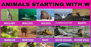 Animals That Start With W 30 Fascinating Animals Beginning With W Visual Dictionary