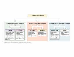Tissue Chart Answer Key Biol 160 Human Anatomy And Physiology