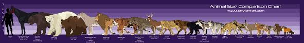 animal sizes chart animal size comparison chart by myuui on deviantart