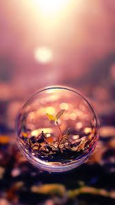 beautiful macro photography plant water