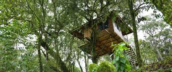 Dream Catcher Kerala Book Tree House in Kerala at Cheapest Price 79
