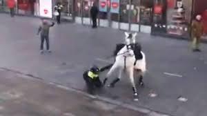 Gevallen politiepaard krijgt extra rustdag: 'Vroeger was er respect voor  dieren'