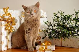 Christmas Gifts For Cats  ProtectaPetChristmas Gifts Cats