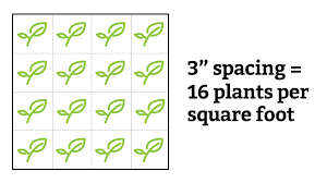 square foot garden spacing what you