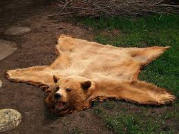 bear hide rug grizzly skin