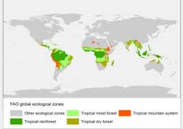 Global location of tropical rainforest : Tropical Forest Wikipedia