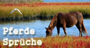 Pferdesprüche Und Weisheiten über Reiter Und Pferde