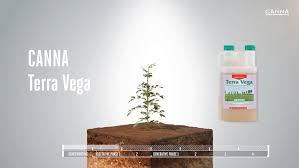 Canna Terra Vega Canna Uk