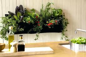 indoor kitchen garden. Indoor Vertical Vegetable Garden Gorgeous Kitchen Image Of Small Front Yard Rock Diy I