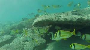 Snorkeling the Reefs (Red Reef Park, South Inlet Park) - Boca ...