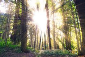 Image result for heavenly light