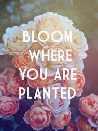 Die Schönsten Blumen Zitate Dyi Home Idea Blumen Zitate Blumen