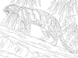 Small Picture Leopards coloring pages Free Coloring Pages