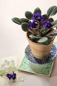 Prodotti 39 prodotti per piante da interno resistenti. Le 8 Piante Da Appartamento Resistenti Per I Negati Del Verde