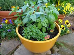 How To Plant An Outdoor Potted Herb Garden  Little House In The Container Herb Garden Plans