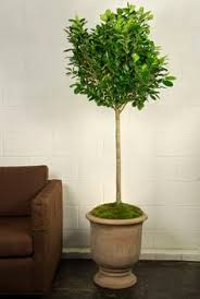 office pot plants. your online indoor plants nursery and pots store the most convenient way to buy house office in houston pot l