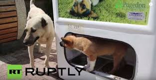 Dog Vending Machine Beauteous Vending Machine Recycles Plastic Bottles And Feeds Homeless Dogs