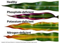 Deficiency Chart Of Plant Nutrients Farm Advice Farmnest