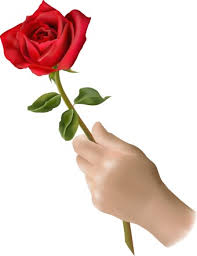 single red rose flower. Perfect Rose Single Red Rose Flower In Single Red Rose Flower