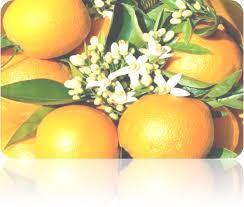 МИНИСТЕРСТВО ОБРАЗОВАНИЯ И НАУКИ УКРАИНЫ Реферат Тропические  Реферат на тему Тропические фрукты и овощи