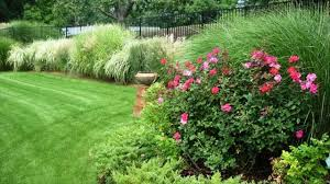 make your garden beautiful with ornamental herb rue best for garden border