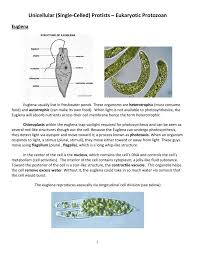 What Detects Light In The Euglena Protist Notes